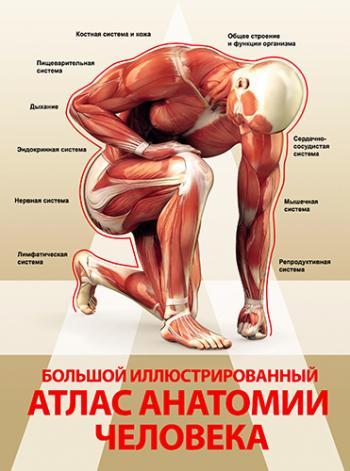 Книга по анатомии головацький 2 том